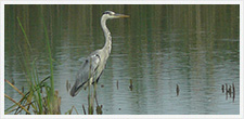 Guided tour in the Albufera Natural Park (Bird watching)